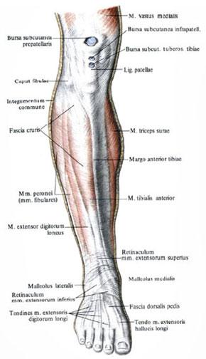 понравился ваш боль в голени сзади ниже колена трогательные